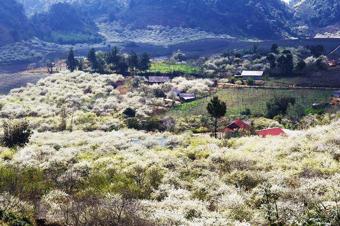 Mùa hoa mận nở trắng trời cao nguyên Mộc Châu - VnExpress Du lịch