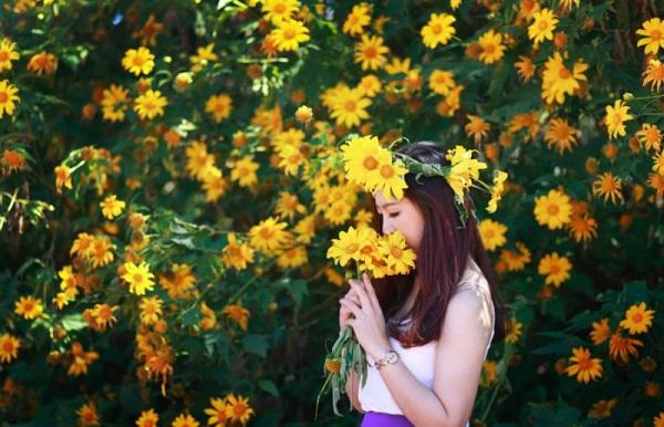Kìm lòng không nổi trước mùa hoa dã quỳ đẹp nức nở ở Mộc Châu - PYS Travel
