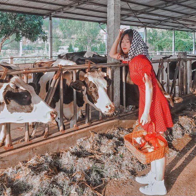 Một ngày hóa thân thành nông dân chăn bò tại trang trại bò sữa siêu hot - Metrip.Vn