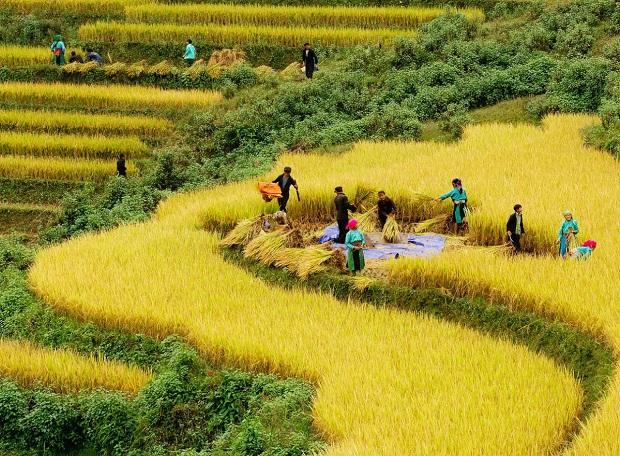 Kinh nghiệm du lịch Hà Giang mùa lúa chín 2020
